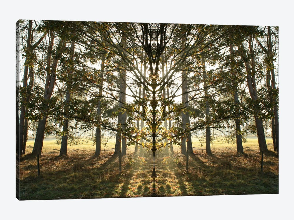 Morning Tree Sun Flare Symmetry by Alyson Fennell 1-piece Canvas Art Print