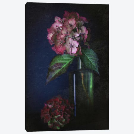 Autumnal Hydrangea Canvas Print #FEN6} by Alyson Fennell Art Print