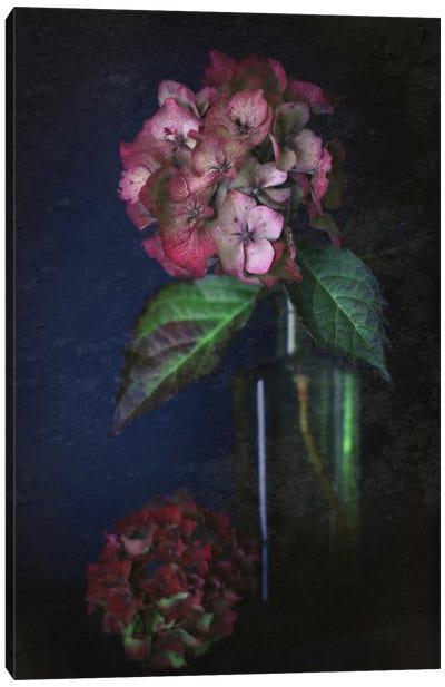 Autumnal Hydrangea Canvas Art Print