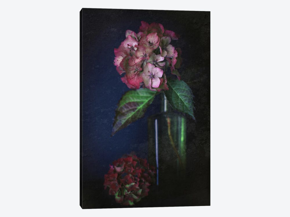 Autumnal Hydrangea by Alyson Fennell 1-piece Canvas Art Print
