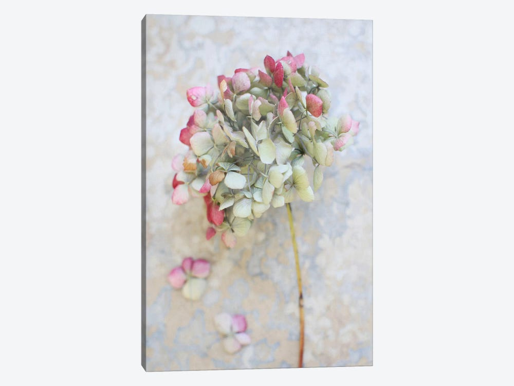 Pastel Dried Hydrangea I by Alyson Fennell 1-piece Canvas Artwork