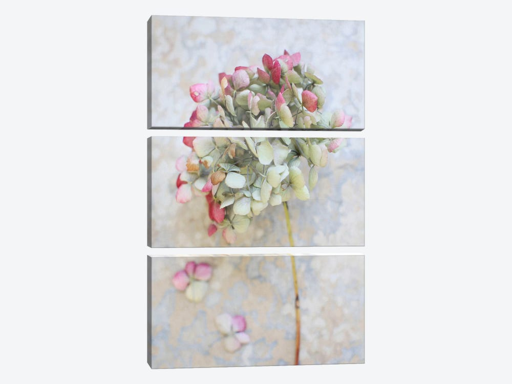 Pastel Dried Hydrangea I by Alyson Fennell 3-piece Canvas Art
