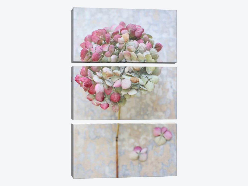 Pastel Dried Hydrangea II by Alyson Fennell 3-piece Canvas Art Print