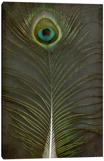 Peacock Feather II Canvas Art Print