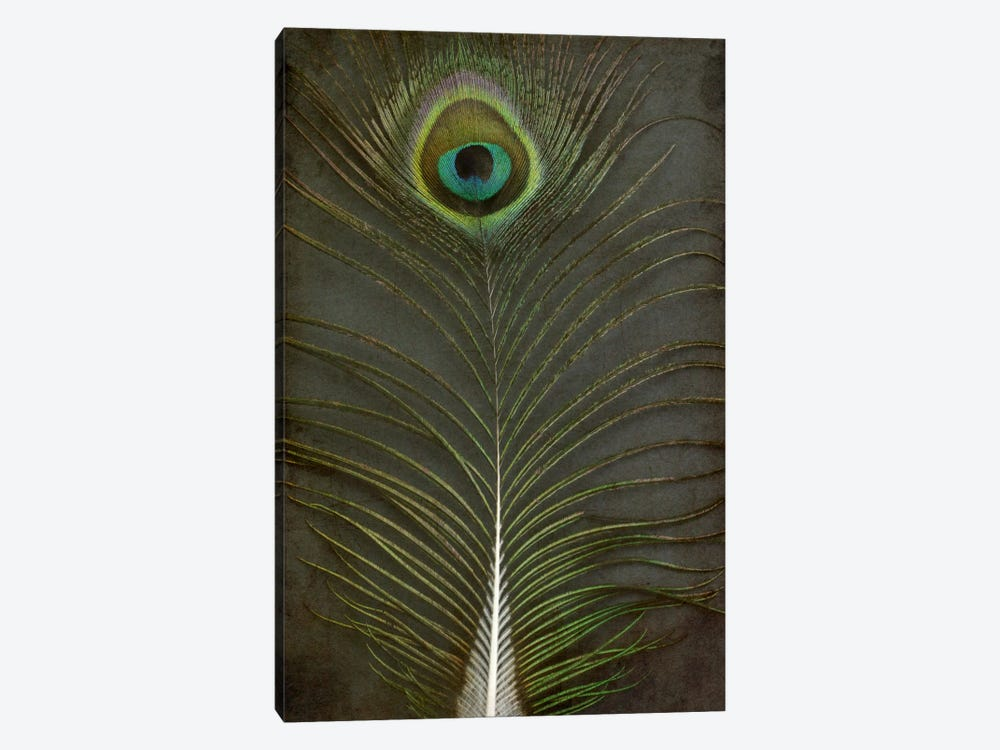 Peacock Feather II by Alyson Fennell 1-piece Art Print