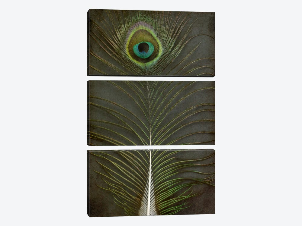 Peacock Feather II by Alyson Fennell 3-piece Canvas Art Print