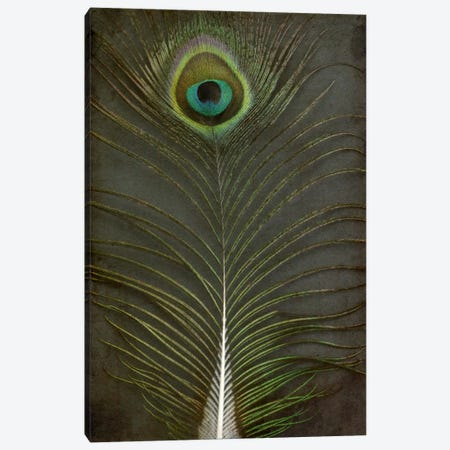 Peacock Feather II Canvas Print #FEN73} by Alyson Fennell Canvas Wall Art