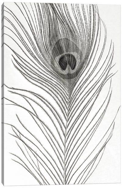 Peacock Feather Mono Canvas Art Print