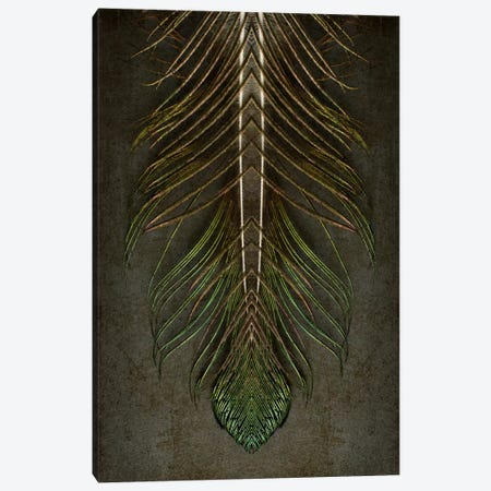 Peacock Feather Symmetry Archangel Canvas Print #FEN76} by Alyson Fennell Art Print