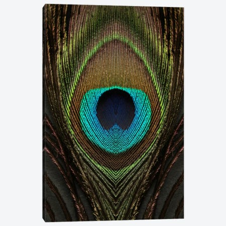 Peacock Feather Symmetry I Canvas Print #FEN77} by Alyson Fennell Art Print