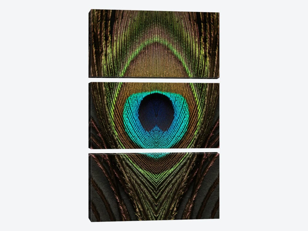 Peacock Feather Symmetry I by Alyson Fennell 3-piece Canvas Art Print