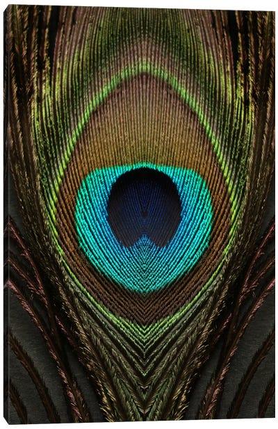 Peacock Feather Symmetry I Canvas Art Print