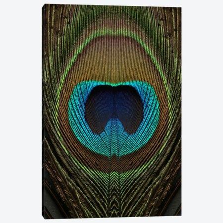 Peacock Feather Symmetry II Canvas Print #FEN78} by Alyson Fennell Canvas Art