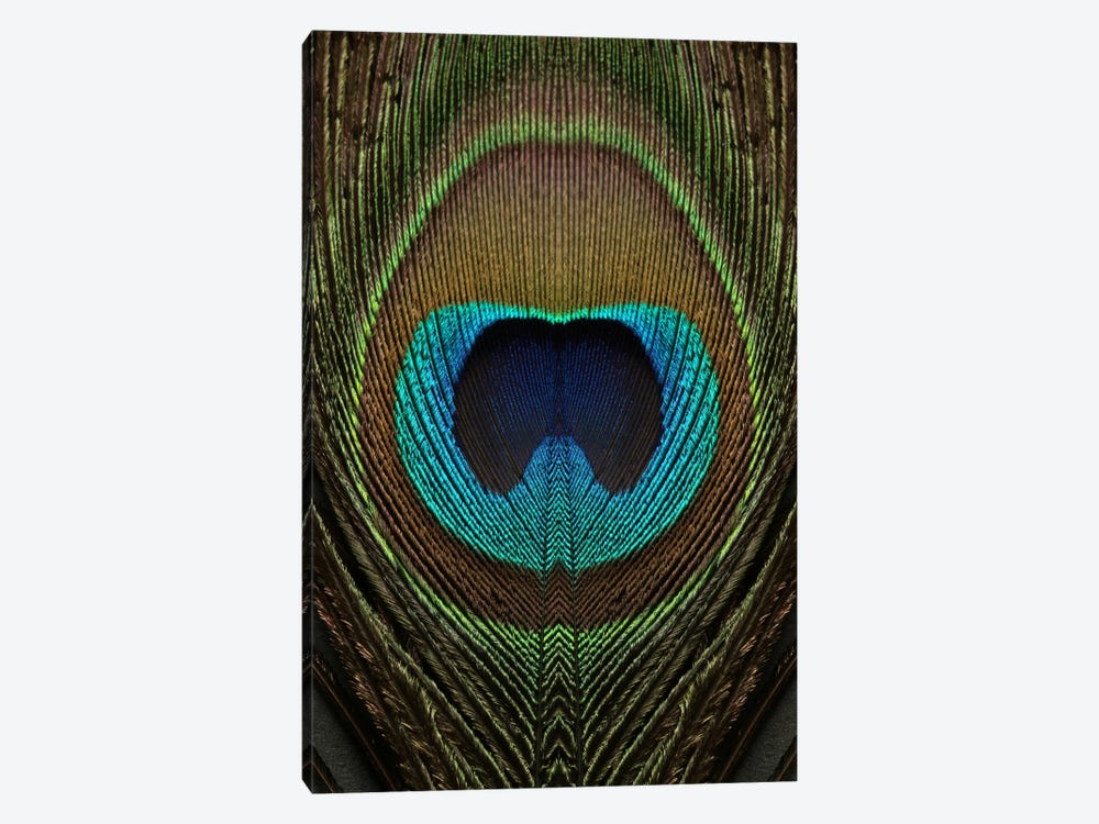 Peacock Feather Symmetry II by Alyson Fennell 1-piece Canvas Artwork