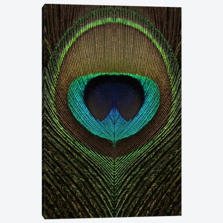 Peacock Feather Symmetry III Canvas Print #FEN79} by Alyson Fennell Canvas Art