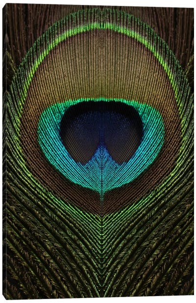 Peacock Feather Symmetry III Canvas Art Print