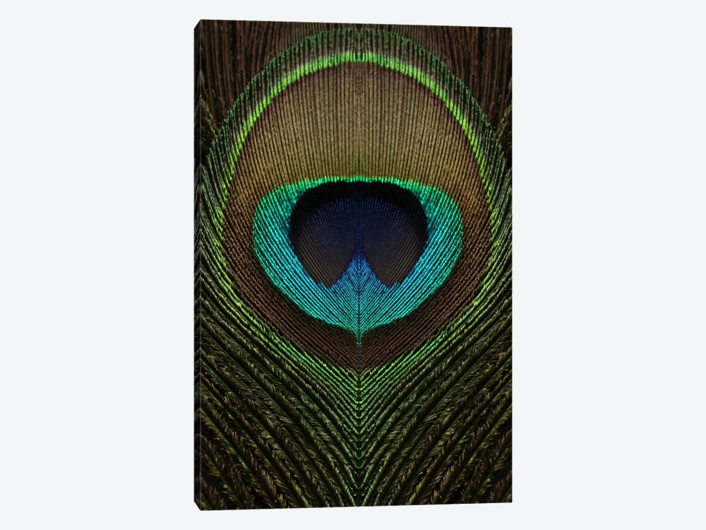 Peacock Feather Symmetry III by Alyson Fennell 1-piece Canvas Print