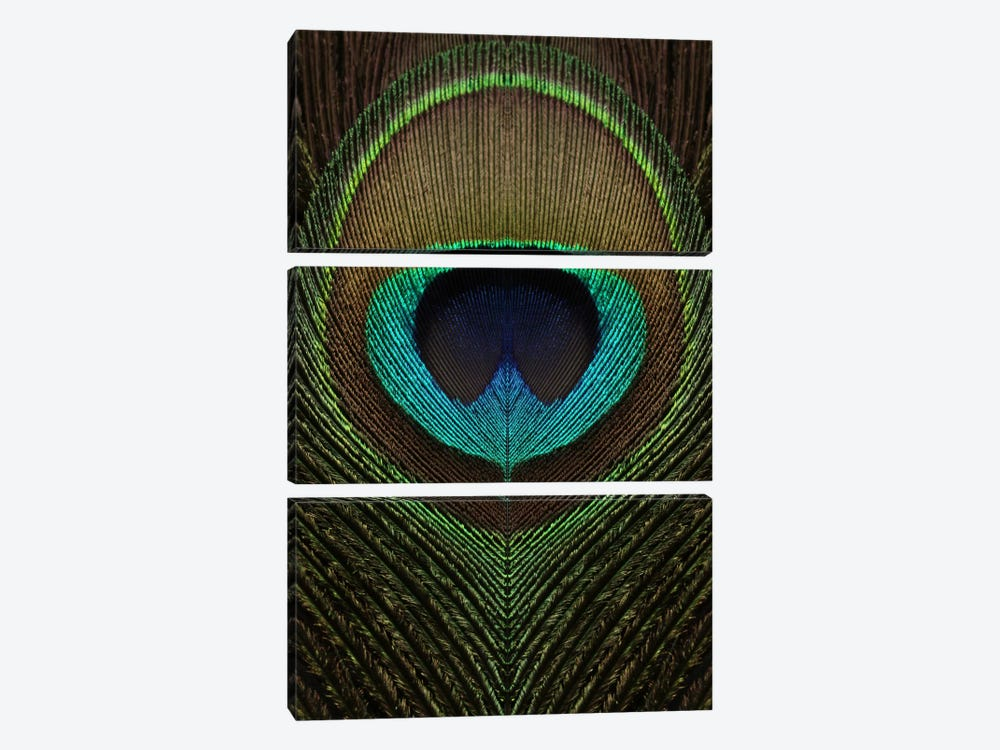 Peacock Feather Symmetry III by Alyson Fennell 3-piece Canvas Print