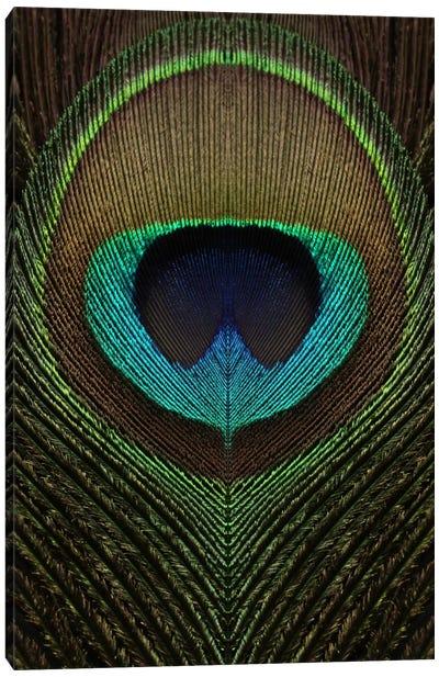 Peacock Feather Symmetry III Canvas Art Print