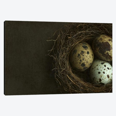 Bird's Nest And Quail Eggs Closeup Canvas Print #FEN7} by Alyson Fennell Canvas Print