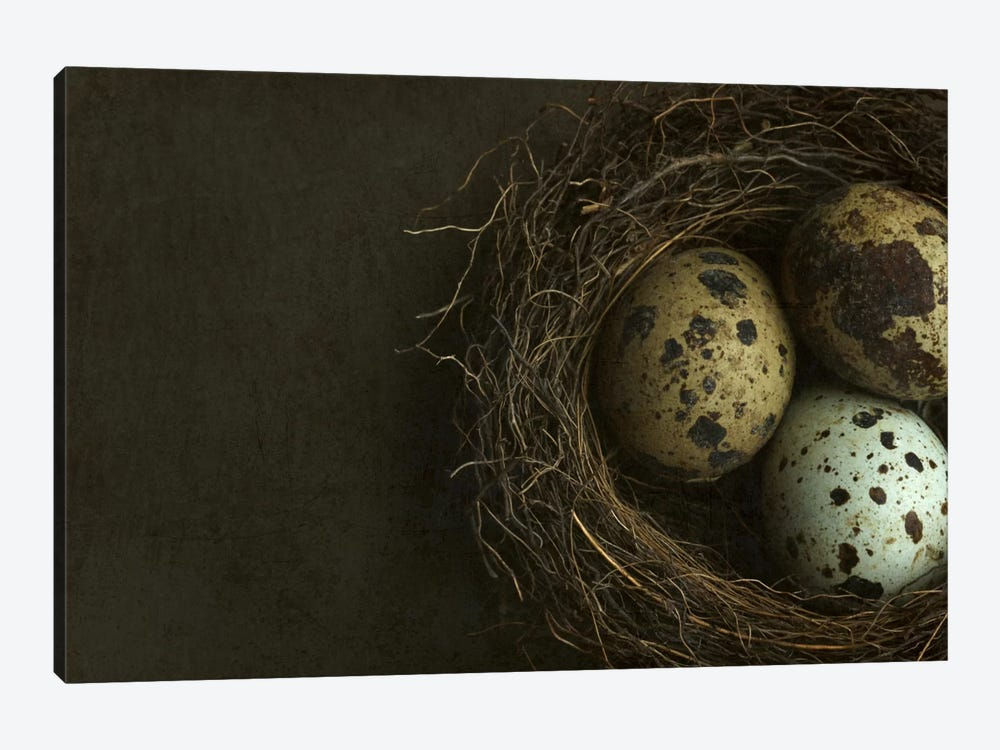 Bird's Nest And Quail Eggs Closeup by Alyson Fennell 1-piece Canvas Artwork