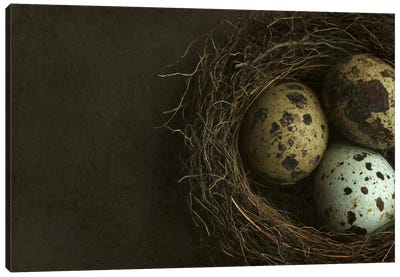 Bird's Nest And Quail Eggs Closeup Canvas Art Print