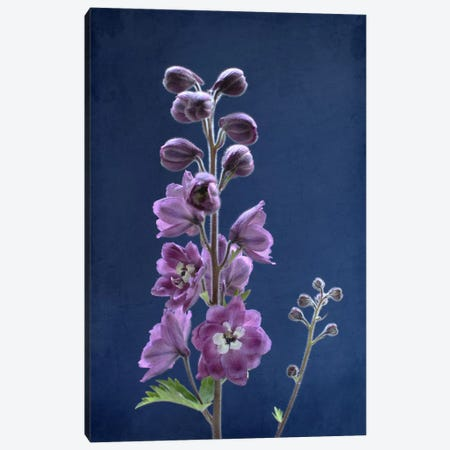 Purple Delphinium 3-Piece Canvas #FEN82} by Alyson Fennell Canvas Print