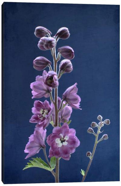 Purple Delphinium Canvas Art Print