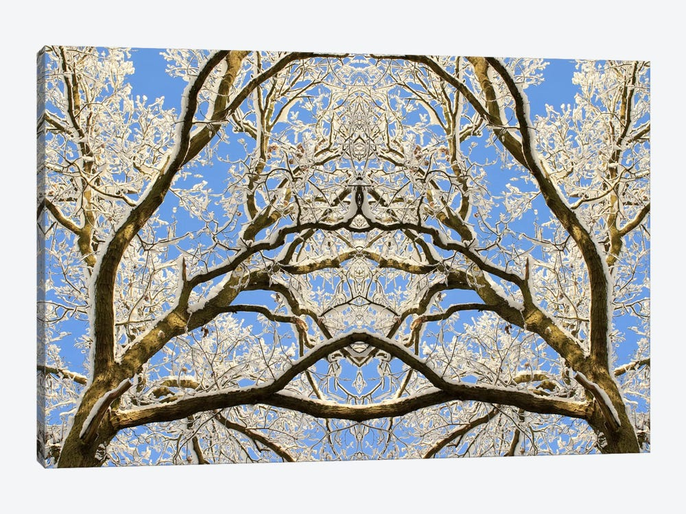 Snow Covered Tree Tops Symmetry by Alyson Fennell 1-piece Canvas Artwork