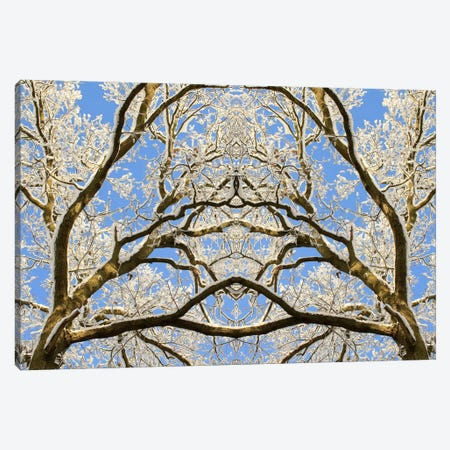 Snow Covered Tree Tops Symmetry 3-Piece Canvas #FEN85} by Alyson Fennell Canvas Art