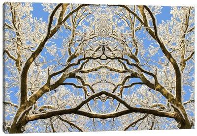 Snow Covered Tree Tops Symmetry Canvas Art Print