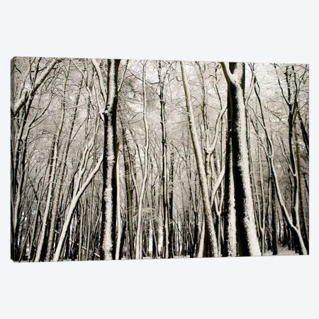 Snow Covered Trees Canvas Print #FEN86} by Alyson Fennell Canvas Art