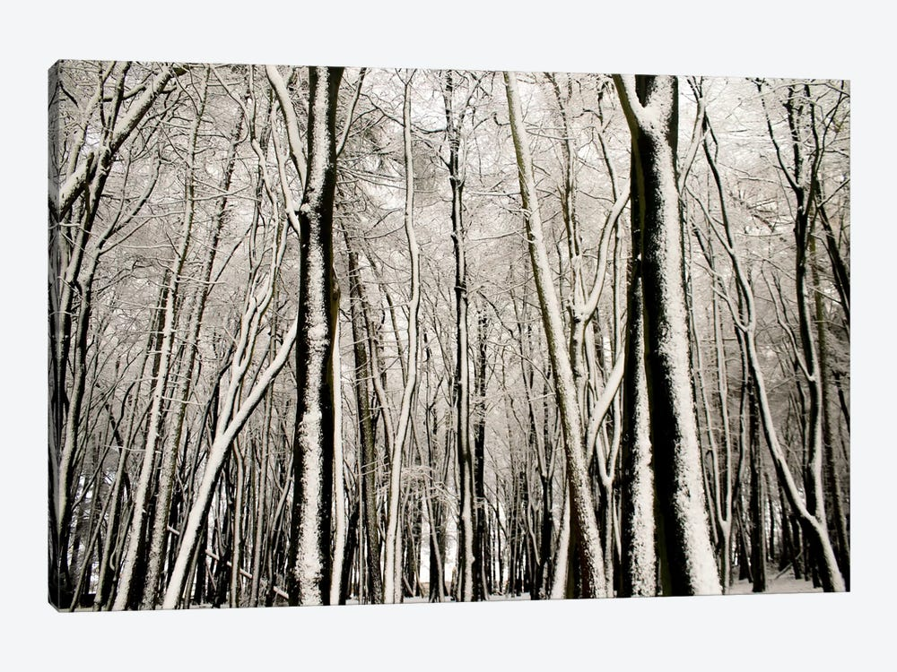 Snow Covered Trees by Alyson Fennell 1-piece Art Print