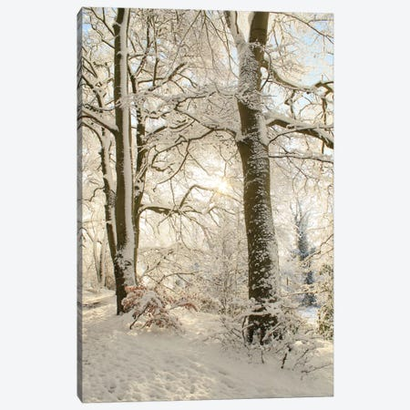 Snowy Winter Trees Canvas Print #FEN87} by Alyson Fennell Canvas Wall Art