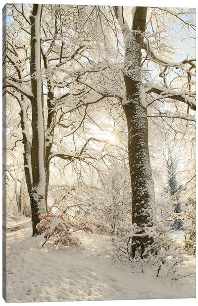 Snowy Winter Trees Canvas Art Print