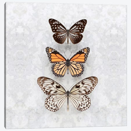 Three Speckled Butterflies Canvas Print #FEN88} by Alyson Fennell Canvas Print