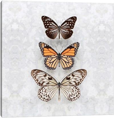Three Speckled Butterflies Canvas Art Print