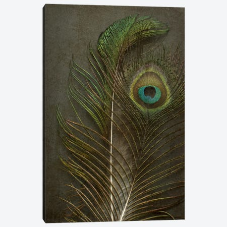 Two Peacock Feathers Canvas Print #FEN90} by Alyson Fennell Canvas Wall Art