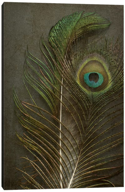 Two Peacock Feathers Canvas Art Print
