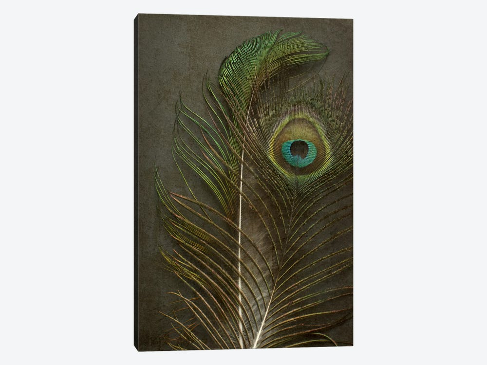 Two Peacock Feathers by Alyson Fennell 1-piece Canvas Wall Art