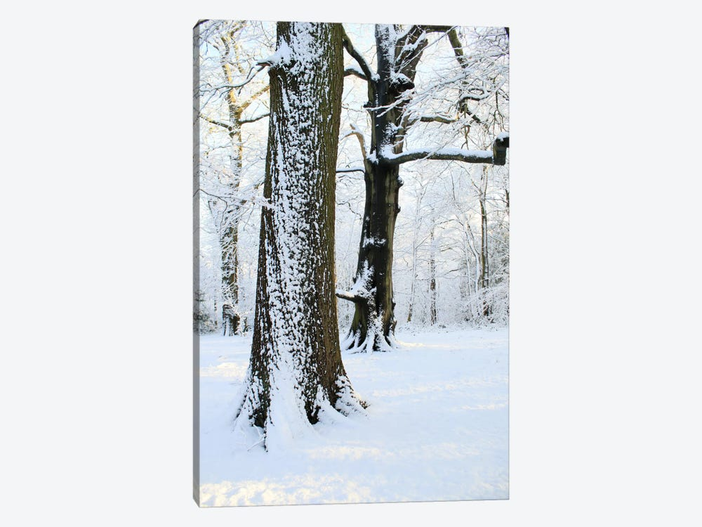 Two Snow Covered Trees by Alyson Fennell 1-piece Art Print