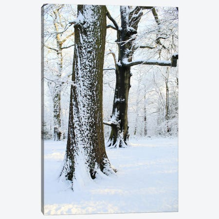 Two Snow Covered Trees Canvas Print #FEN91} by Alyson Fennell Canvas Art