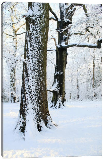 Two Snow Covered Trees Canvas Art Print
