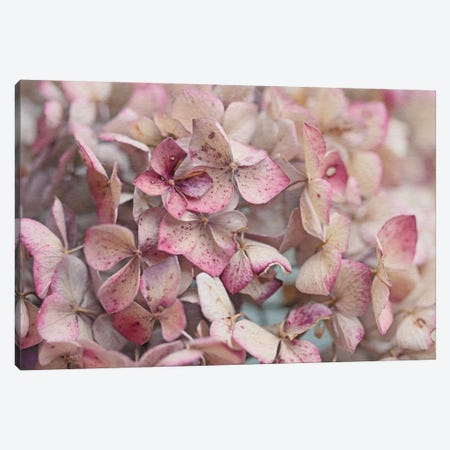 Vintage Hydrangea Canvas Print #FEN92} by Alyson Fennell Canvas Artwork