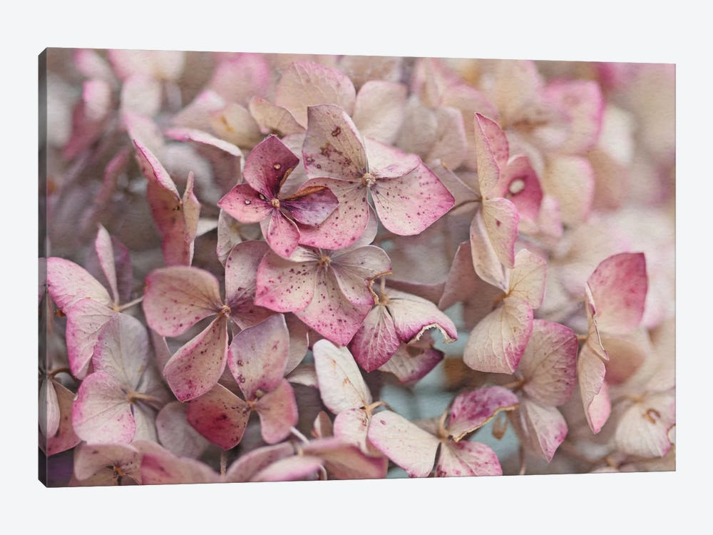 Vintage Hydrangea by Alyson Fennell 1-piece Canvas Wall Art