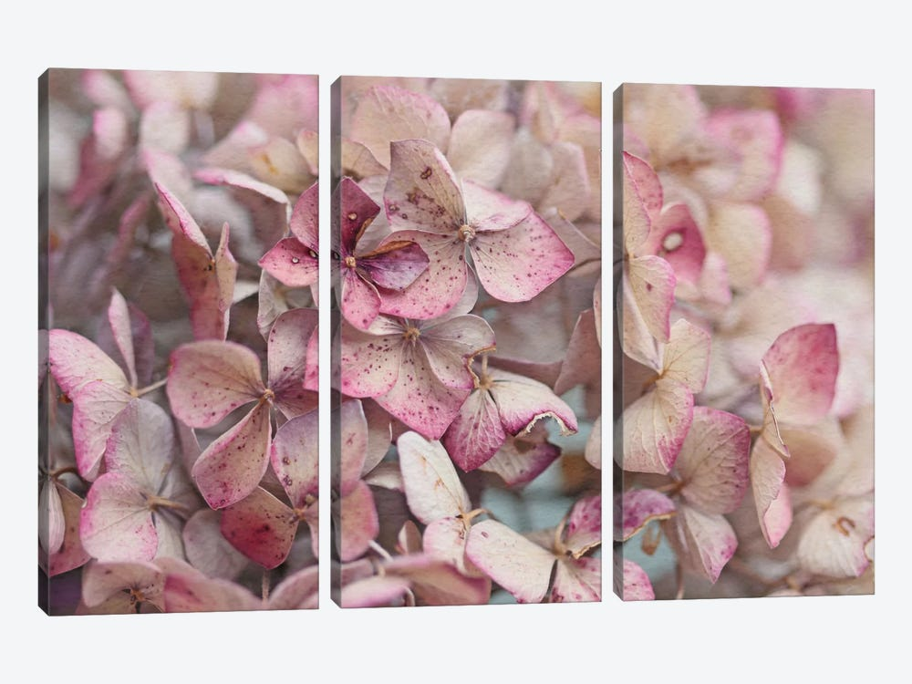 Vintage Hydrangea by Alyson Fennell 3-piece Canvas Artwork