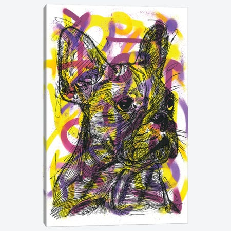 Bulldog Francés (French Bulldog) Canvas Print #FJB116} by Frank Banda Canvas Print