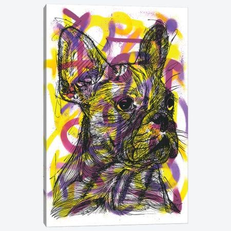 Bulldog Francés (French Bulldog) Canvas Print #FJB116} by Frank Banda Canvas Print