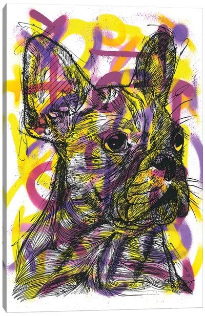 Bulldog Francés (French Bulldog) Canvas Art Print
