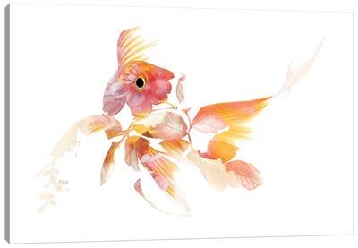 Koi II Canvas Art Print